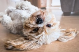 Adoptar una mascota en Cuarentena