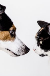 Consejos para contratar un seguro de mascotas