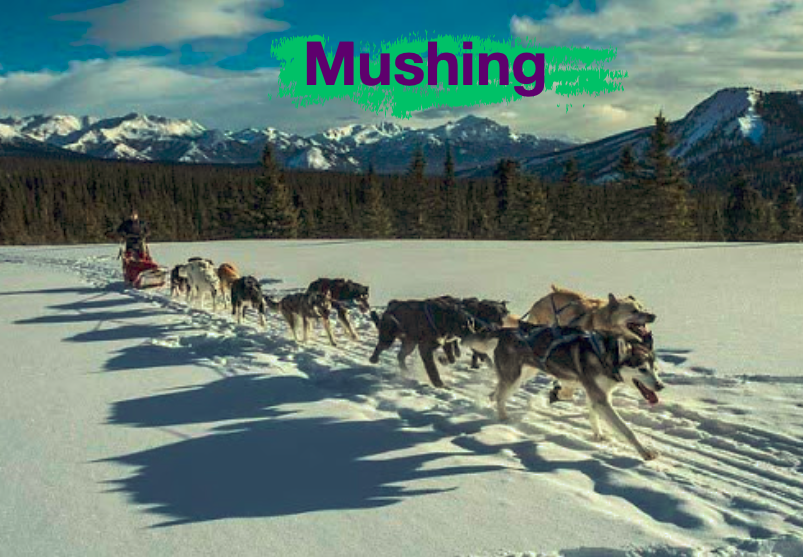 Mushing
